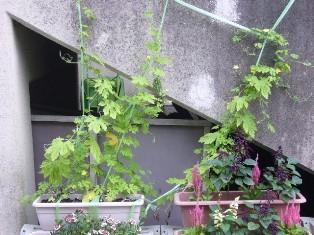 takanohara090727.jpg