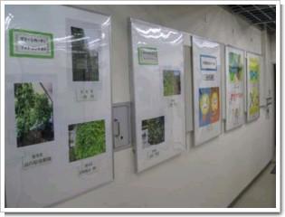 kizugawa-green1.jpg